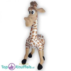 Madagascar Giraffe Melman